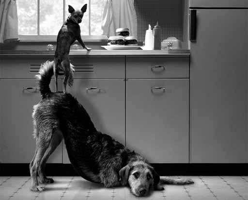 cans preparando a comida