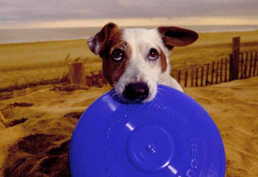 Pancho co frisbee