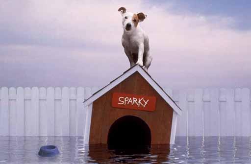Sparky baixo a choiva