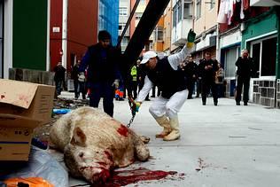 vaca morta a tiros