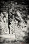Workshop für Hundefotografie
