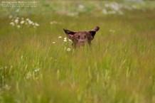 hundefotografie_1DX_4150-mj