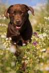 hundefotografie_1DX_4256-mj-mj