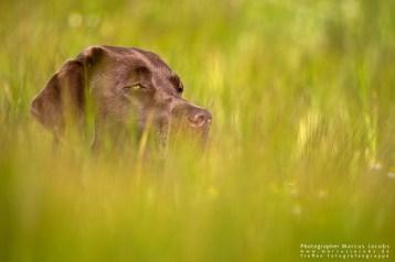 hundfotografie_1DX_4081-mj