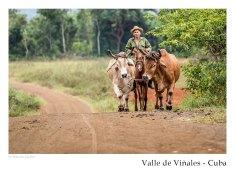 vinales_kuba_94