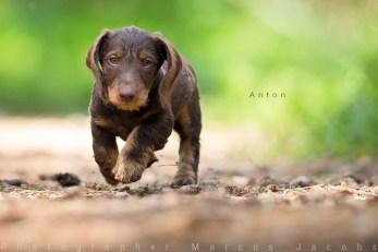 anton__DX_3946-mj