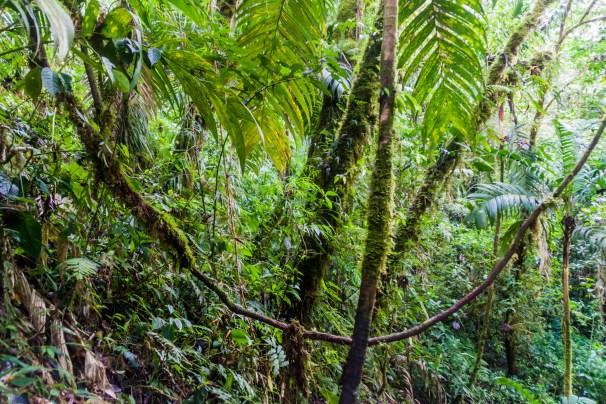 Cloud forest near Boquete, Panama