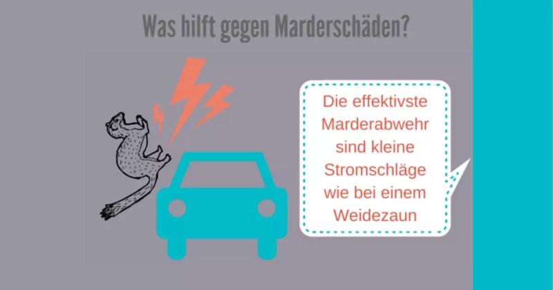 Was hilft gegen Marderschäden? - infografik