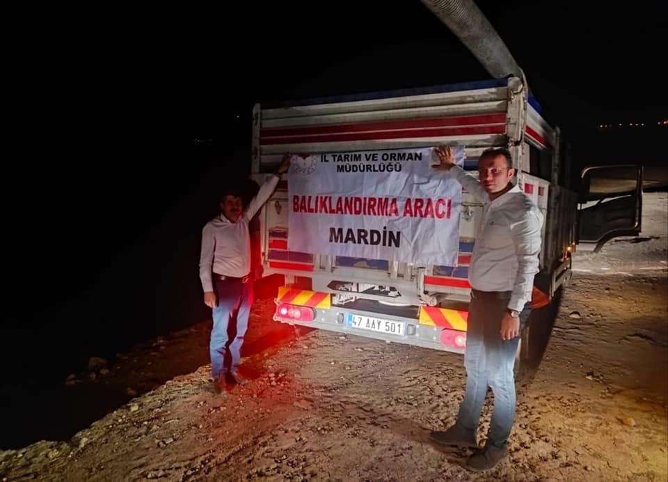 Mardin'de göletlere 918 bin yavru sazan balığı bırakıldı