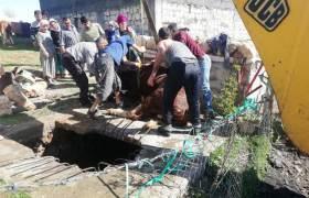 Kuyuya düşen inek  ve horoz kurtarıldı
