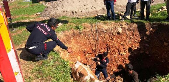 Çukura düşen ineği  itfaiye ekipleri kurtardı
