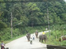 grand elephants