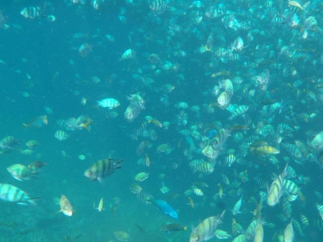 tioman fishes