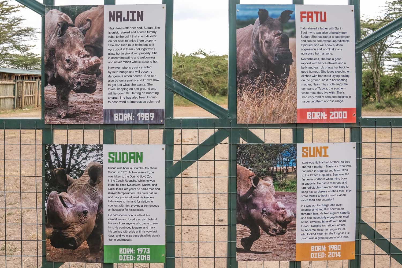 Last Northern White Rhinos in Ol Pejeta