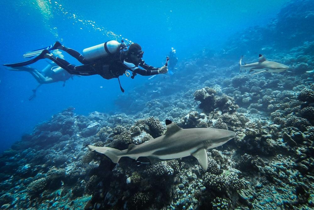 nurkowanie na wyspach towarzystwa