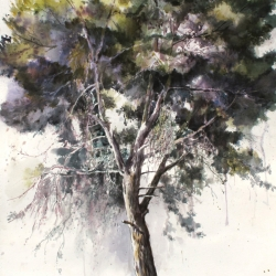 Pine Tree Portrait No.2, 112X76 cm