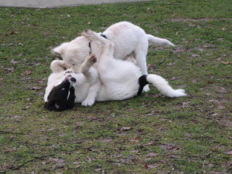 Hundeschule auch