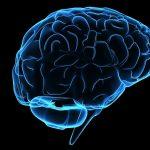 read the brain series