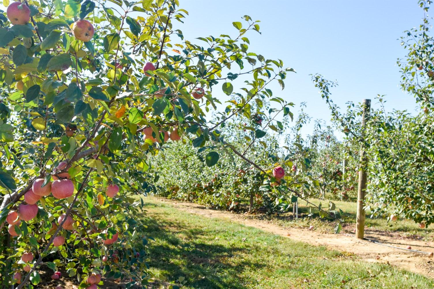 Joe Huber's Family Farm in Indiana