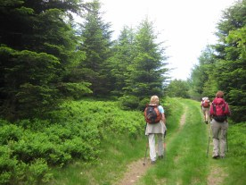 Easy at first. Up through the woods, bilberry bushes everwhere