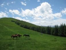 Horses on the homeward stretch