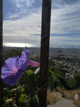 View of the city glimpsed through the morning glory