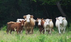 The welcoming committee in the next field.