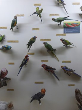 A colourful collection of parakeets.