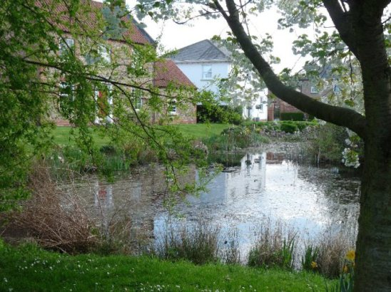 A village pond at North Stainley.
