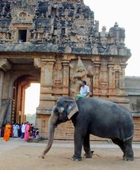 Temple elephant, Thanjavur