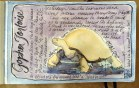 Gopher Tortoise (Print will be available)