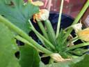 Things growing in my garden