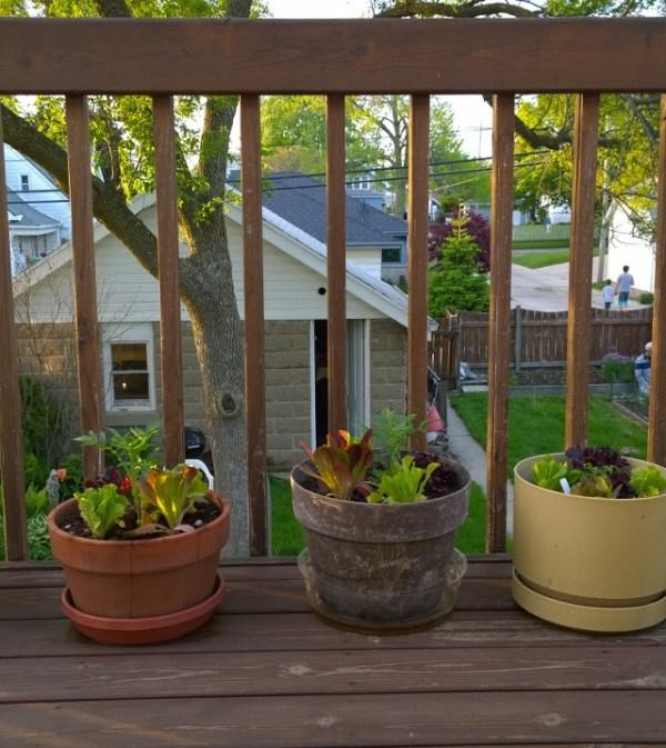Urban Garden 5-26-15