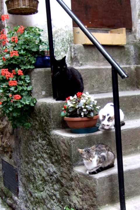 Cats in Apricale