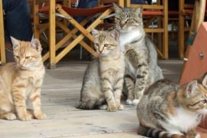 Photo by Margie Miklas Amalfi Coast cats
