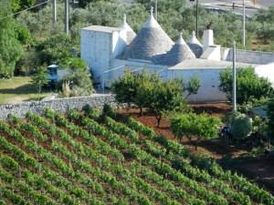 Puglia - Photo by Margie Miklas