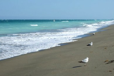 Seagulls Hutchinson Island Beach Florida Photo by Margie Miklas