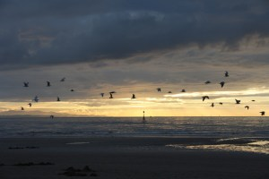 Crosby Beach Liverpool UK Photo by etienne2424 from Pixabay