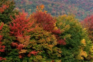 New England October fall foliage Photo by Margie Miklas