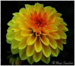Yellow Flower in Dark