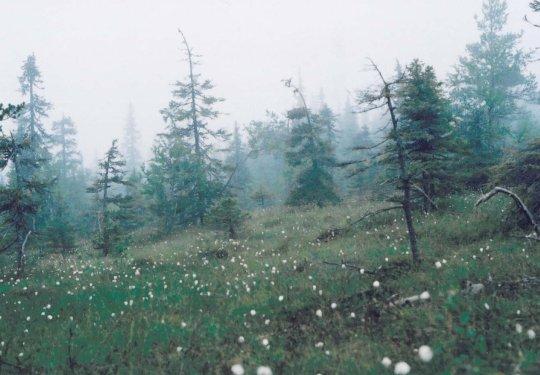 Riisitunturi im Nebel