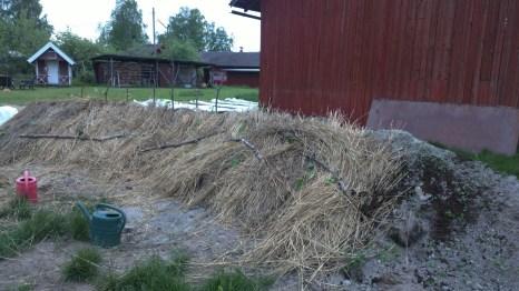 Das neue Hügelbeet, auf dem die Kürbisse und Zucchinis wachsen