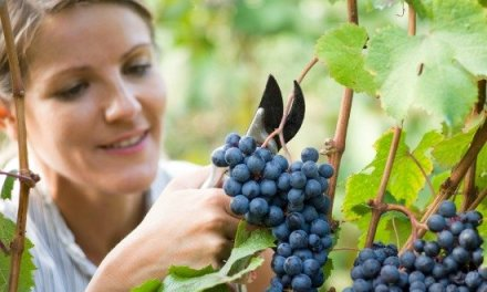 """Go and work in my vineyard"" (Matthew 20:1-16)"