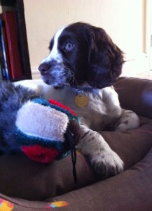 Monty and his cuddly pheasant
