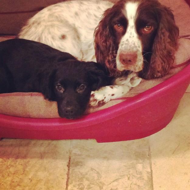 Monty and Dora