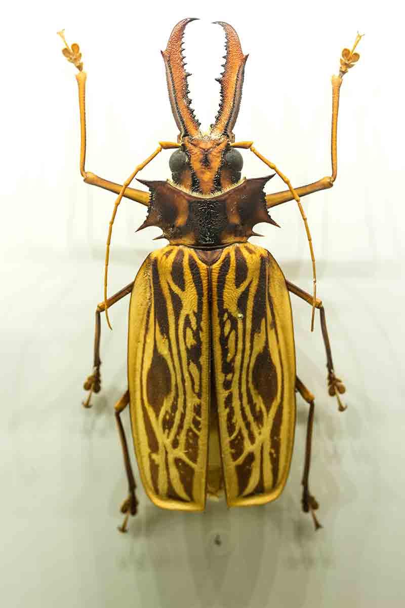 Insectarium 2