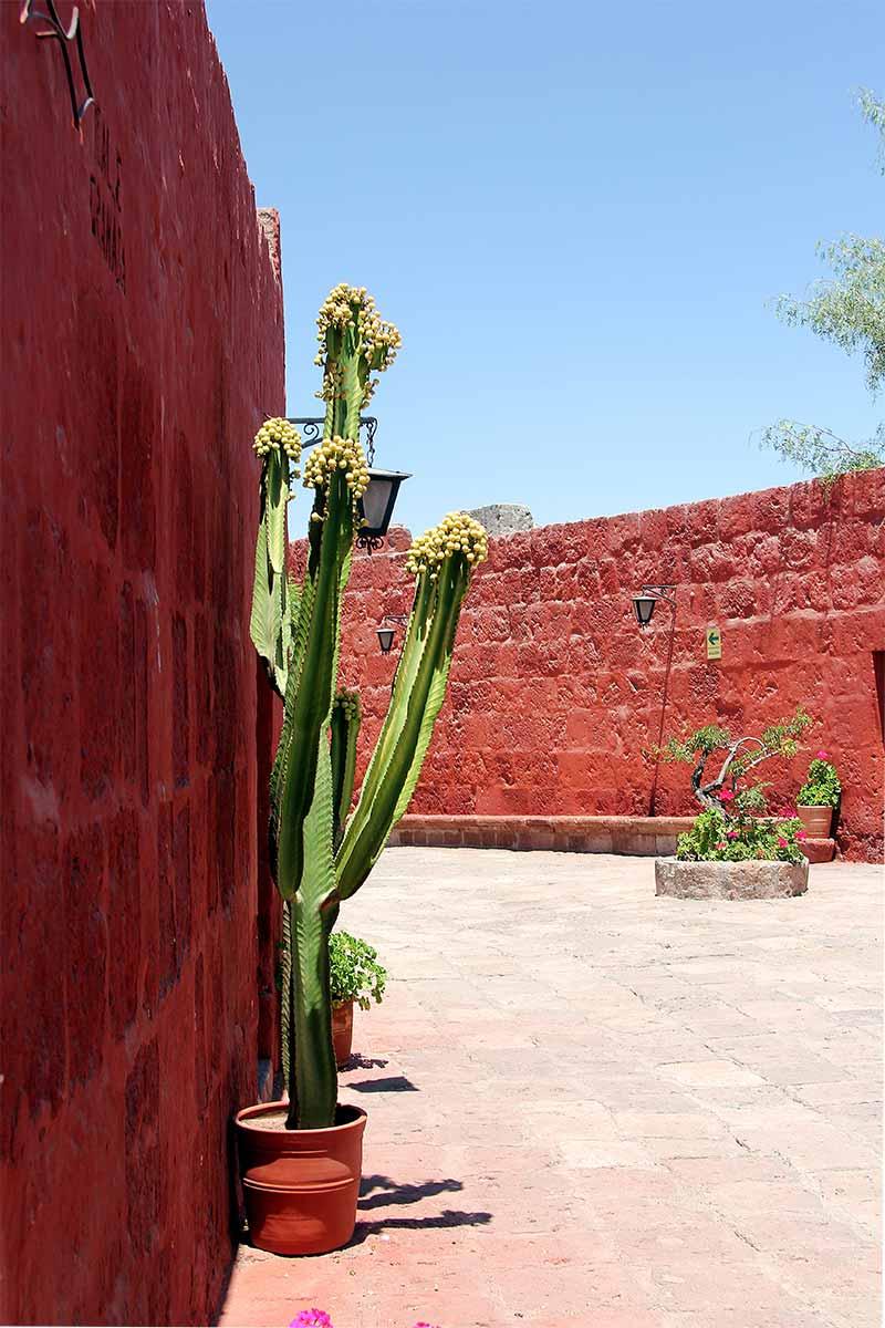 Santa Catalina-Monastery, Arequipa 2