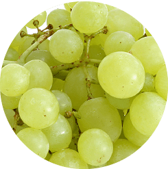 White variety grapes, Tourism - Itineraries - Greek wine