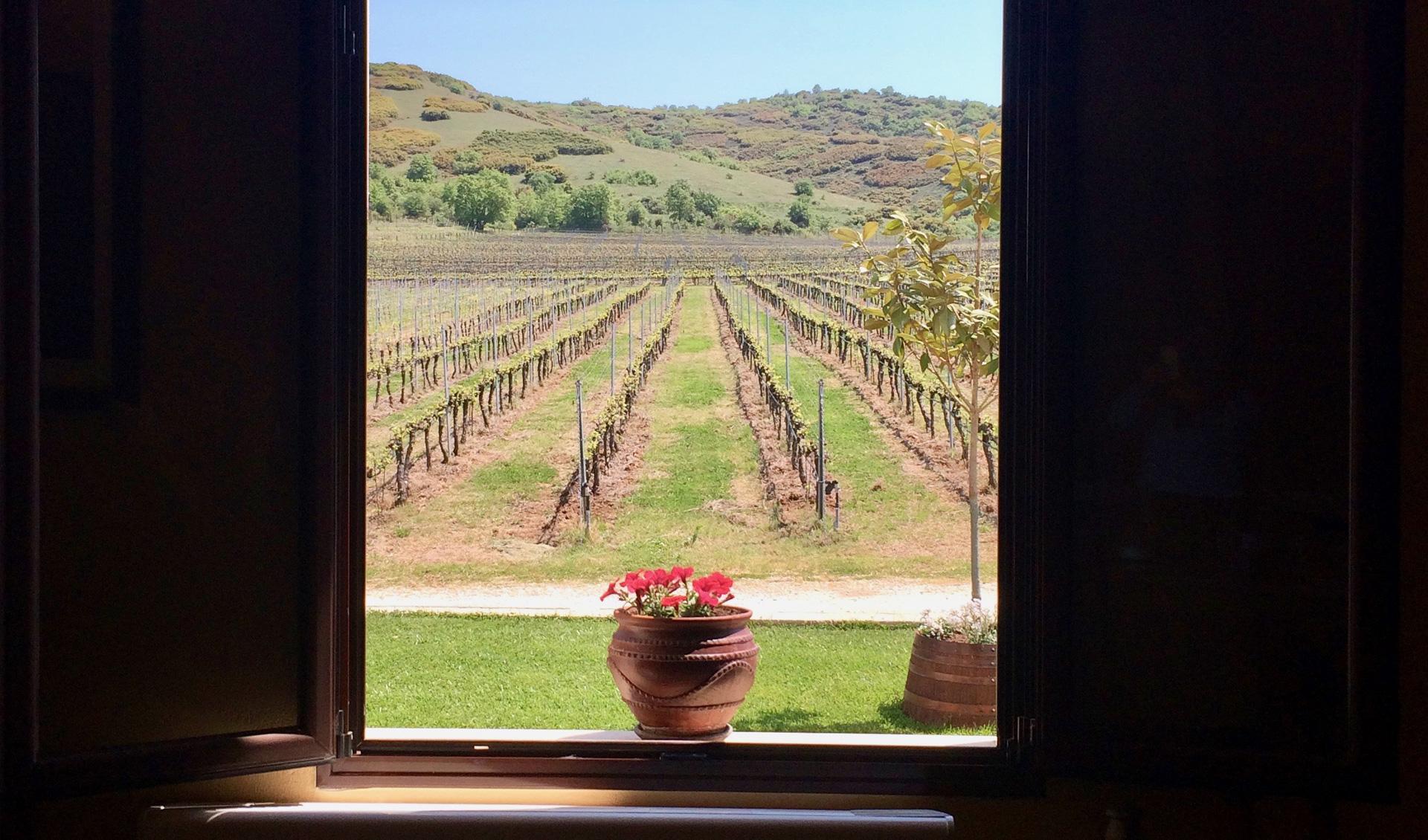 Peloponnese accommodation near the fields, Tourism - Itineraries - Greek wine