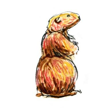Marmotte - encre de Chine, café, crayons de couleur